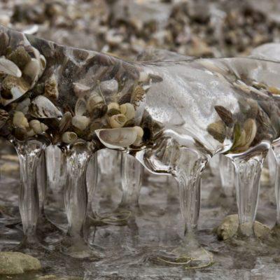 Muschelschar im Eis vereinigt - Uttwil, Bodensee - 27. Januar 2017